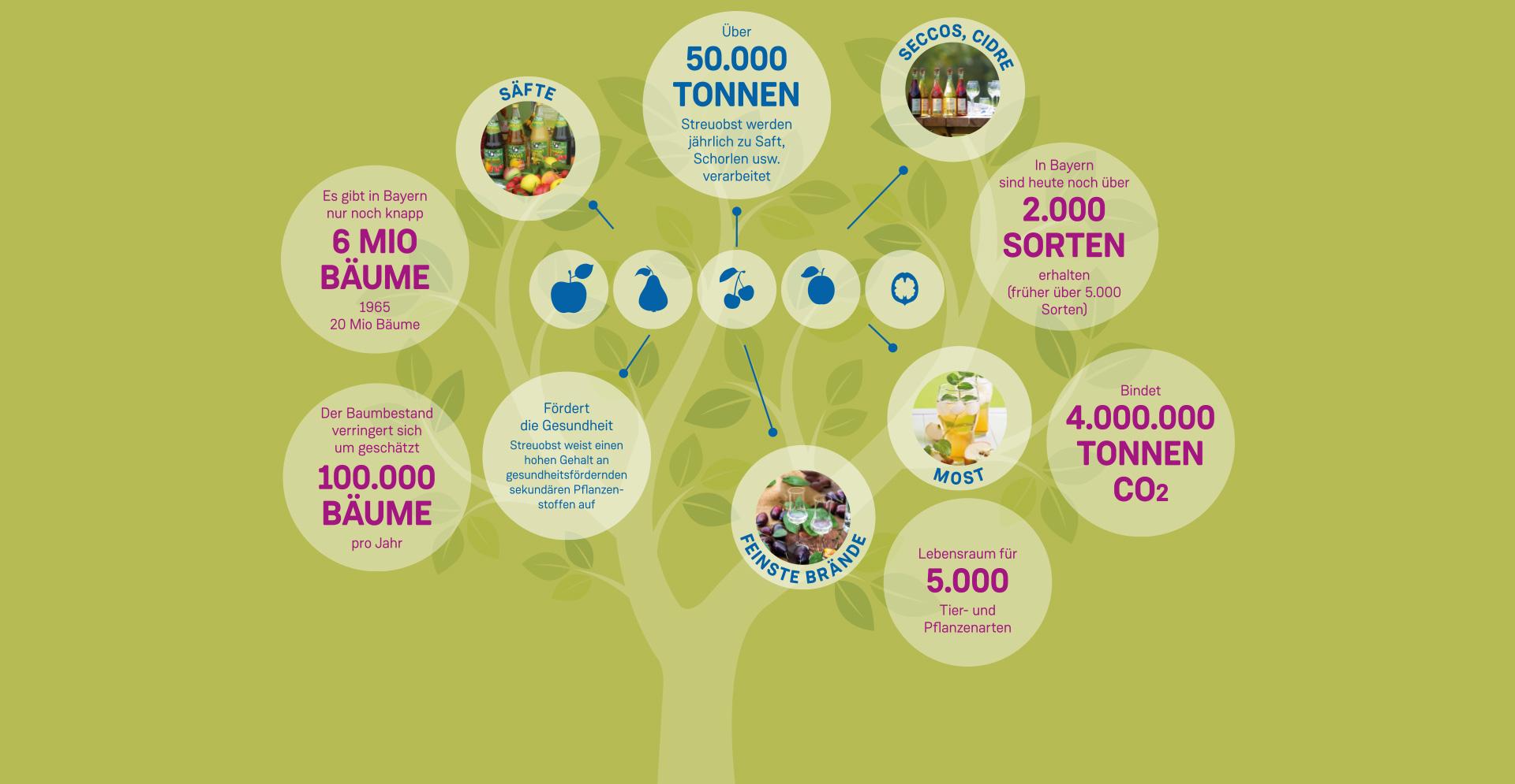 Infografik über Streuobst und Streuobstprodukte