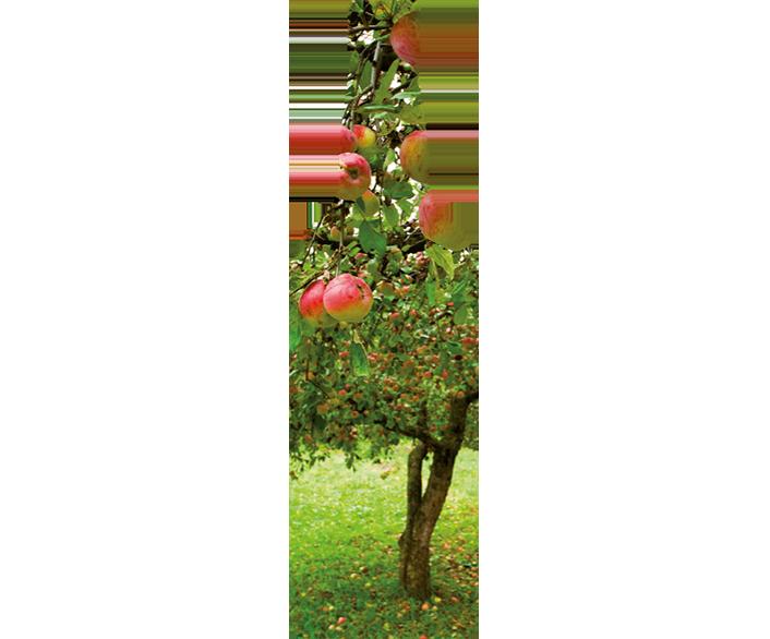 Grafik in Form einer Flasche, darin ein Apfelbaum